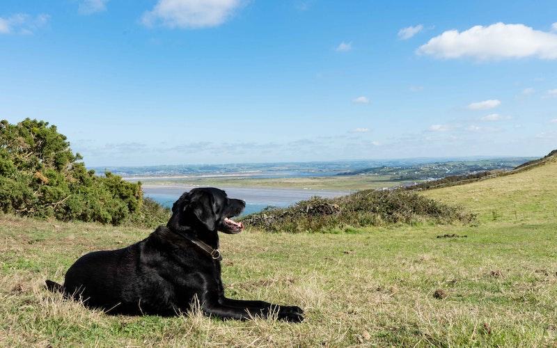 dog friendly holiday cotages Westward Ho! North Devon